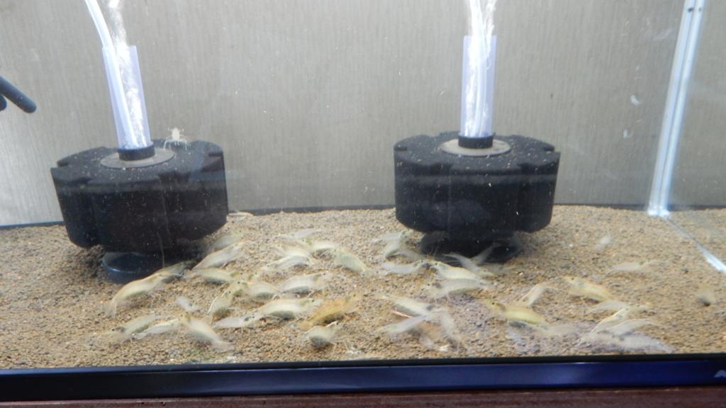 f:id:aquaticplants:20170522000207j:plain