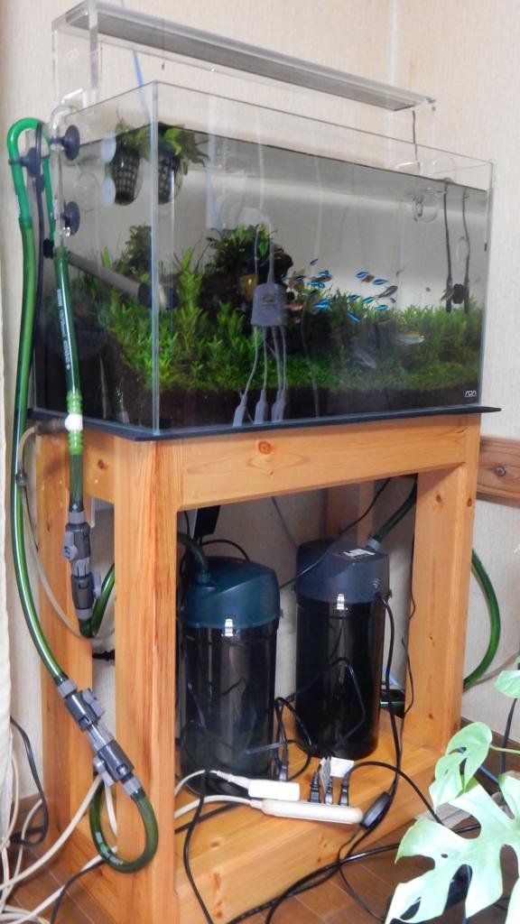 f:id:aquaticplants:20170522000911j:plain