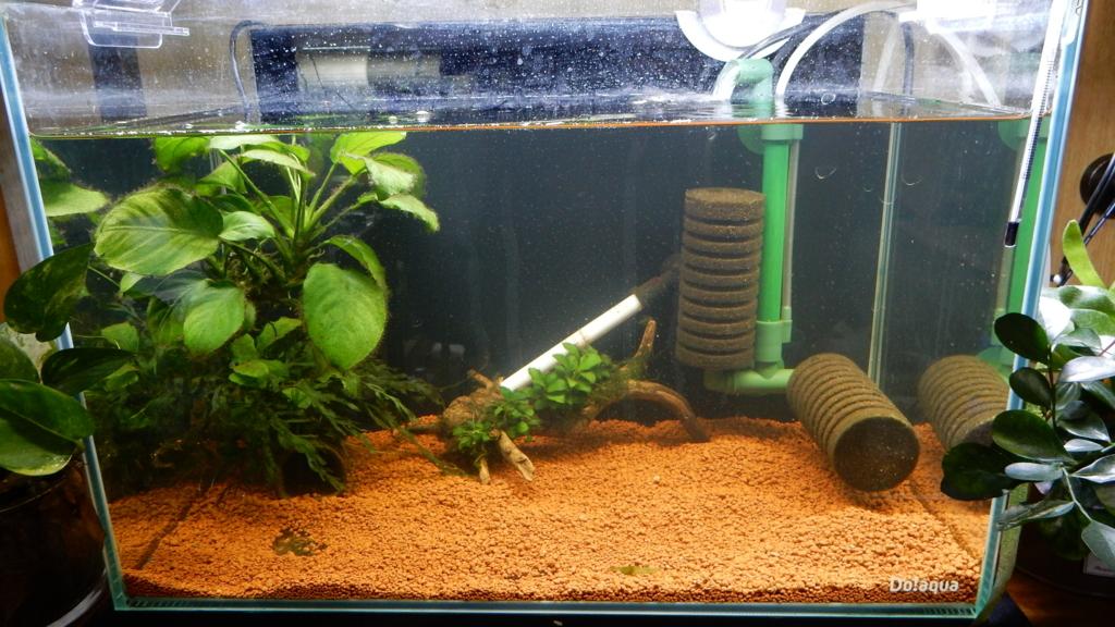 f:id:aquaticplants:20170604215514j:plain