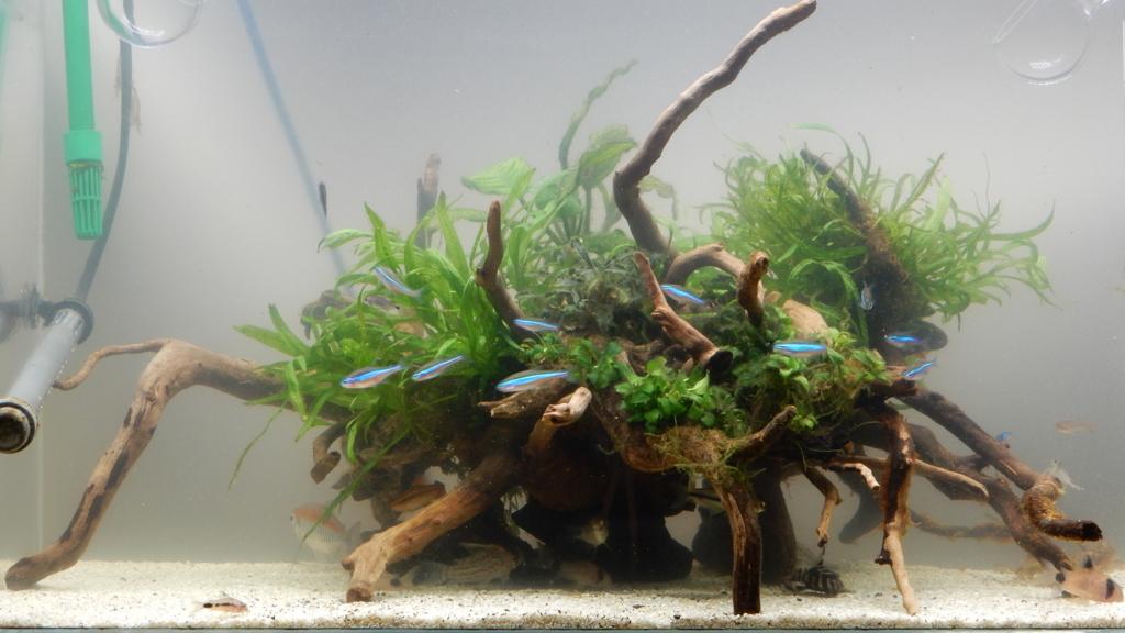 f:id:aquaticplants:20180108205425j:plain