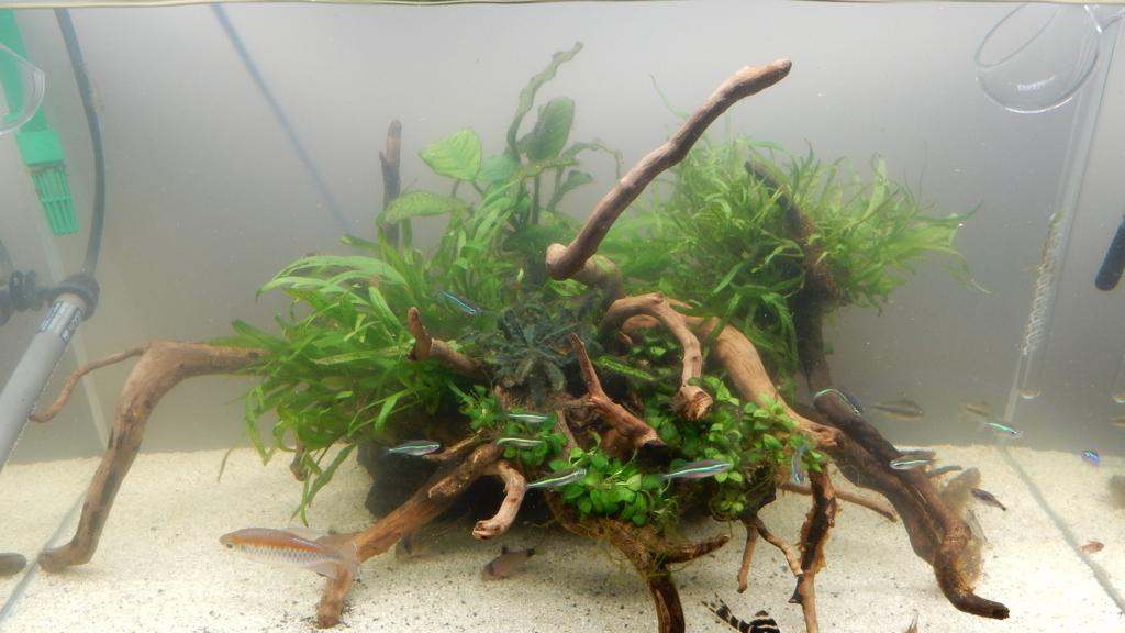 f:id:aquaticplants:20180108205432j:plain