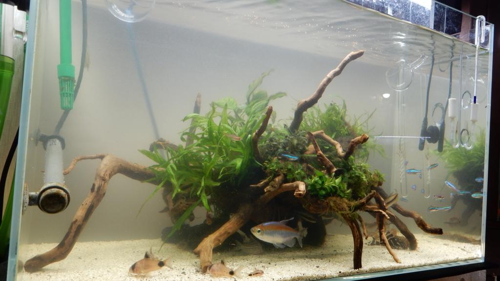 f:id:aquaticplants:20180108205434j:plain