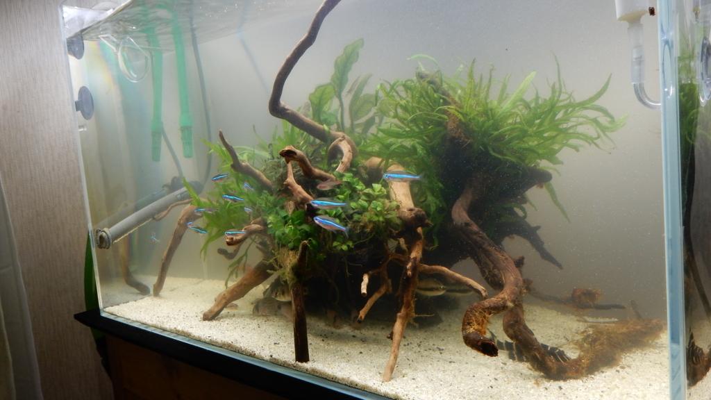 f:id:aquaticplants:20180108205437j:plain