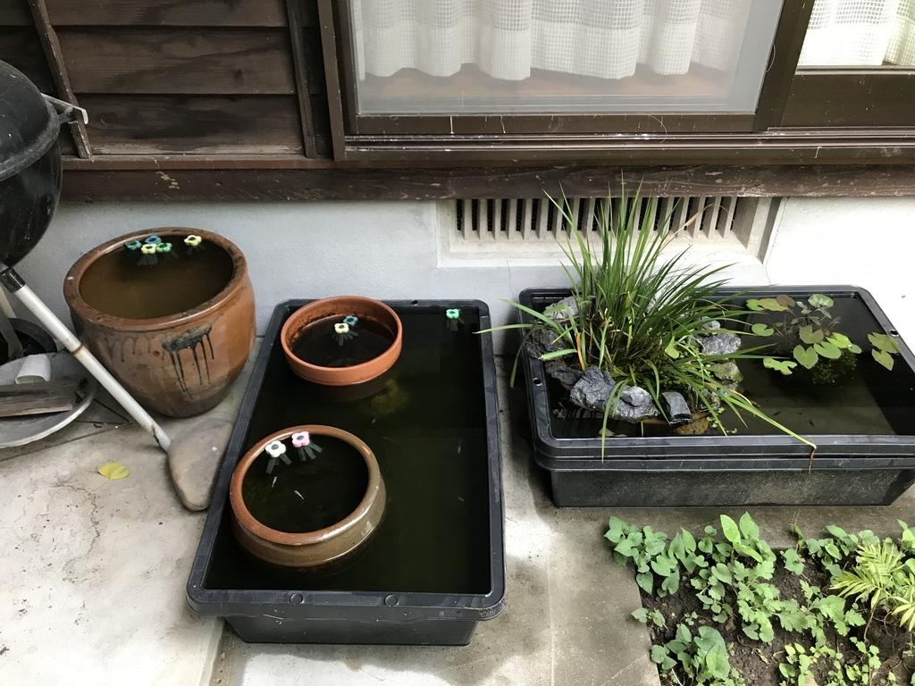 f:id:aquaticplants:20180909155845j:plain