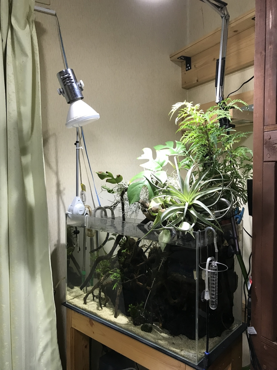 f:id:aquaticplants:20191208232743j:plain