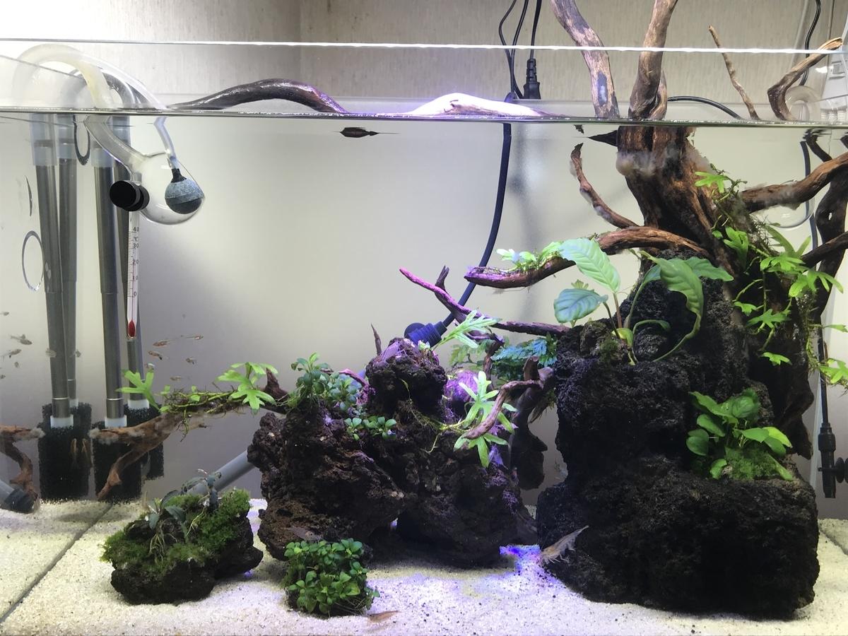 f:id:aquaticplants:20210523190752j:plain