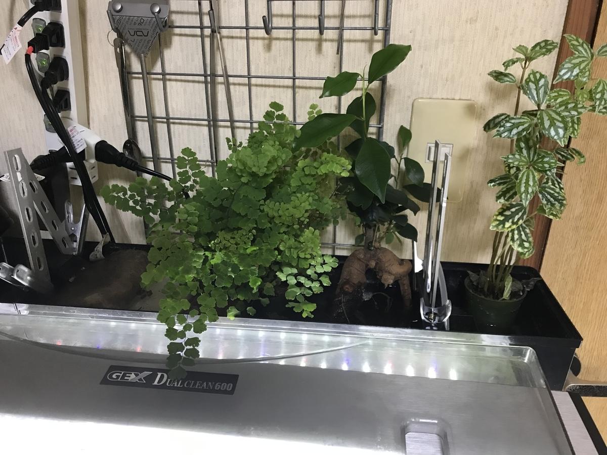 f:id:aquaticplants:20210613215003j:plain