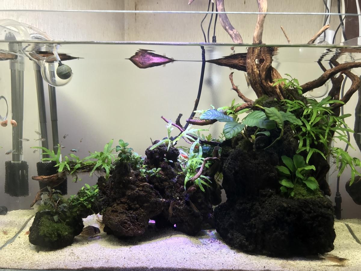 f:id:aquaticplants:20210620191144j:plain
