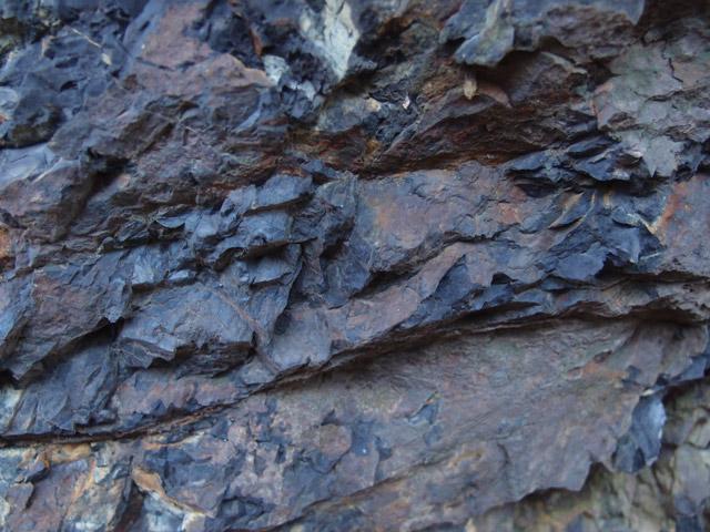 金華山の黒色泥岩