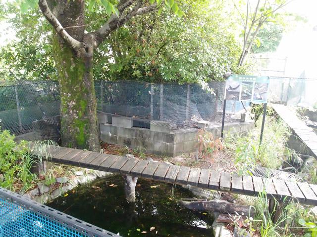 f:id:aquatottotoday:20160615155446j:plain