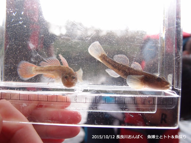 f:id:aquatottotoday:20161210054626j:plain