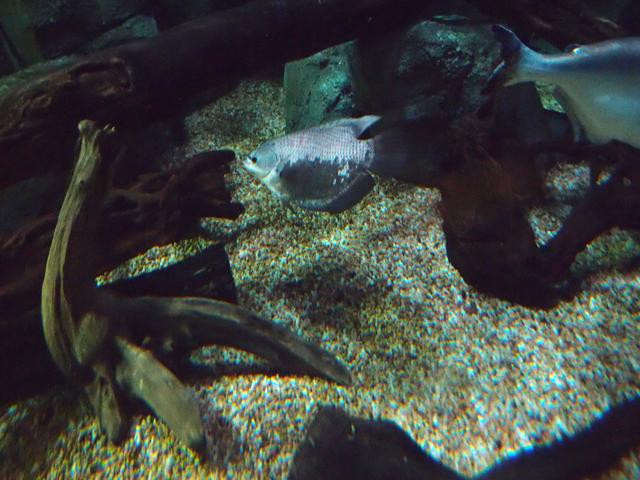 f:id:aquatottotoday:20171222101026j:plain