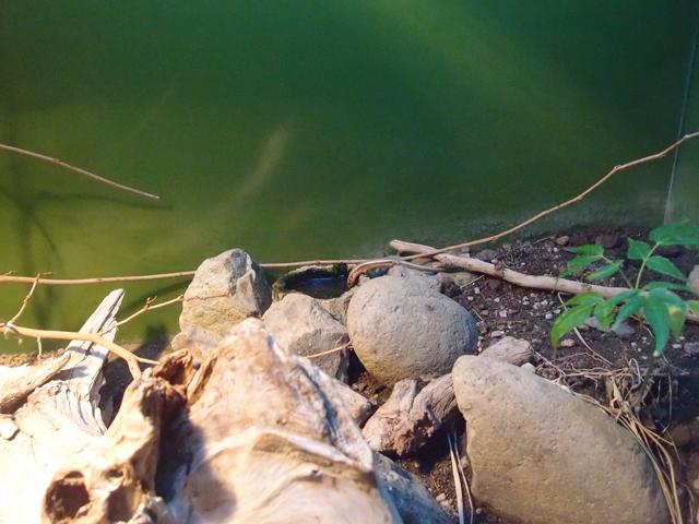 f:id:aquatottotoday:20171229150001j:plain