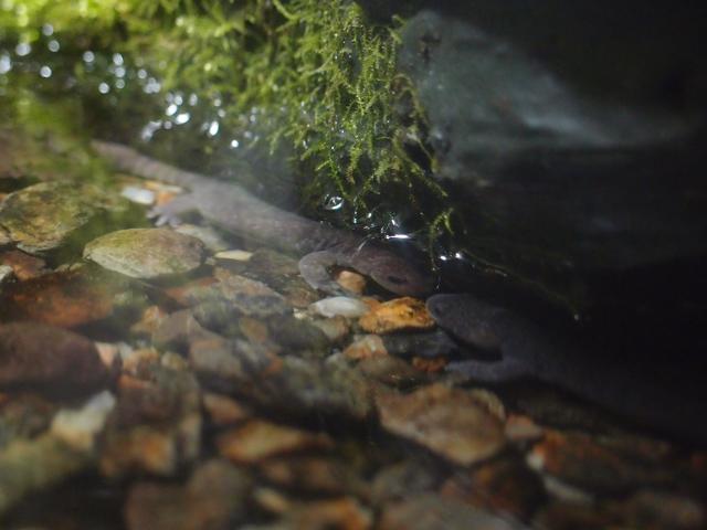 f:id:aquatottotoday:20180314175123j:plain