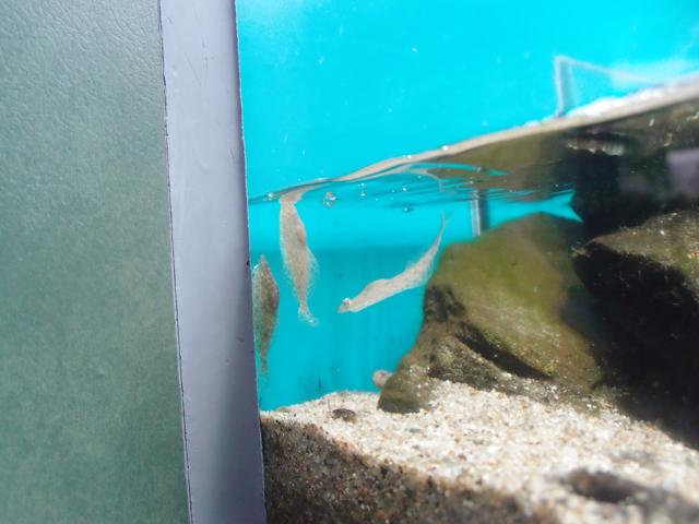 f:id:aquatottotoday:20200330141457j:plain