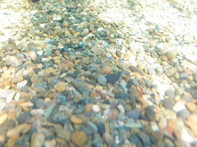 f:id:aquatottotoday:20200416032341j:plain