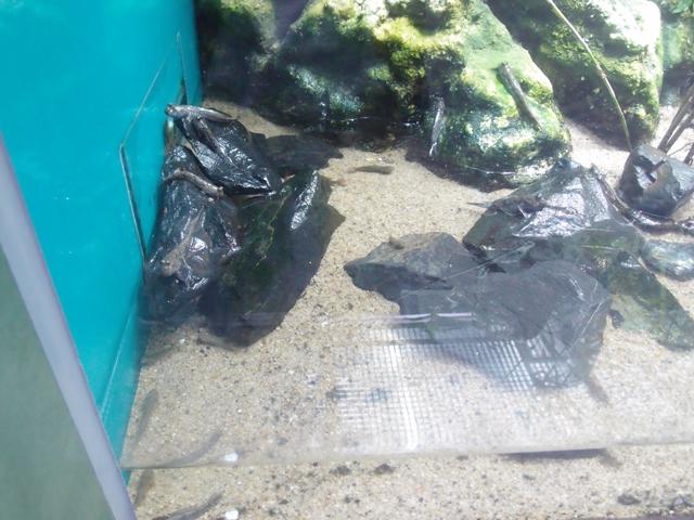f:id:aquatottotoday:20200718160212j:plain