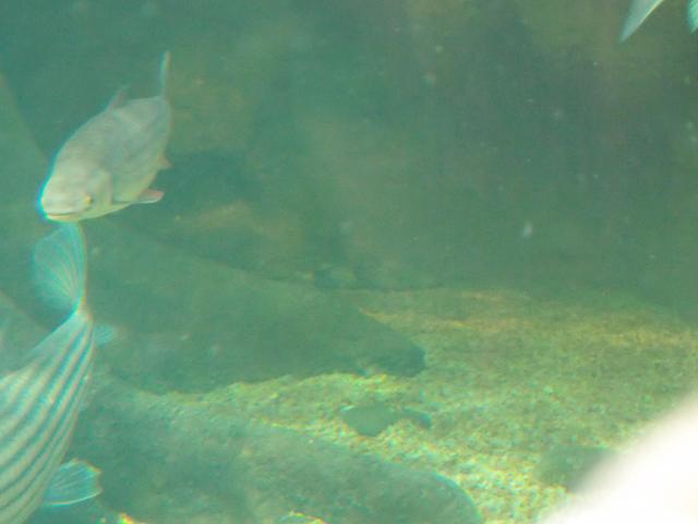 f:id:aquatottotoday:20210101121121j:plain