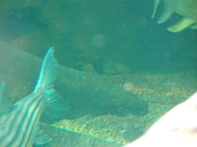 f:id:aquatottotoday:20210101121125j:plain
