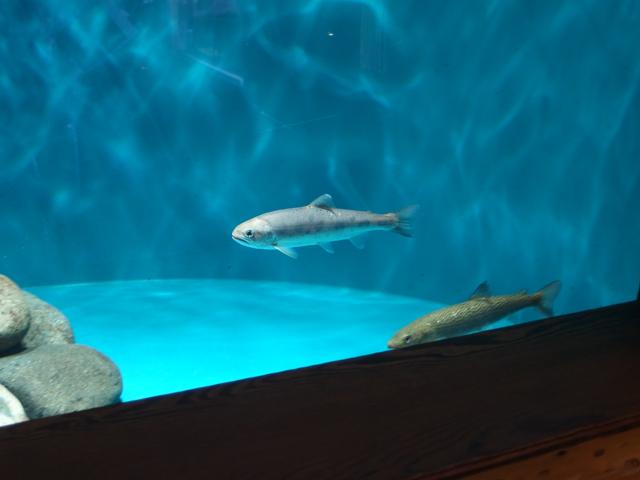 f:id:aquatottotoday:20210604092911j:plain
