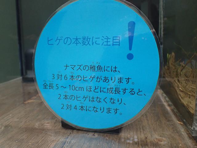 f:id:aquatottotoday:20210628175106j:plain