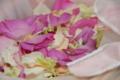 [ヒルトン][ヒルトン成田][結婚式][披露宴][写真][カメラマン][水野]