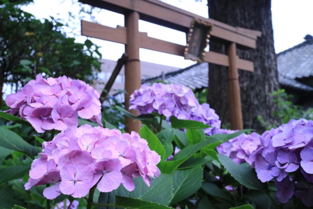 f:id:aqura-saitamac:20160617143429j:plain