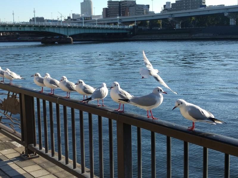 隅田公園での写真