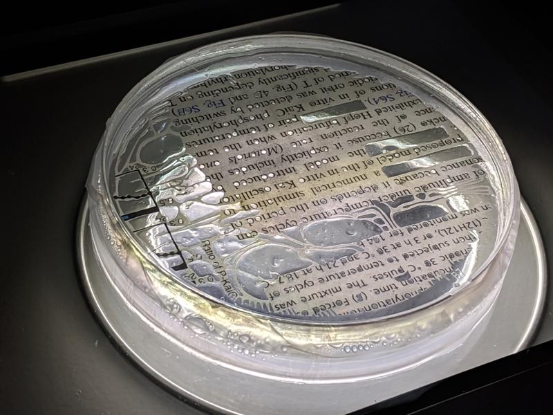 論文をバクテリアに食べさせる「Culturing <Paper>cut」