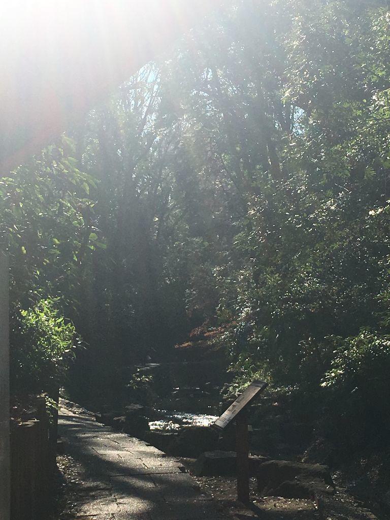 等々力渓谷公園