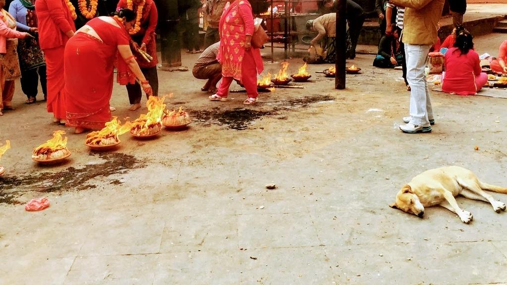 火が近くで炊かれていてもヘッチャラ