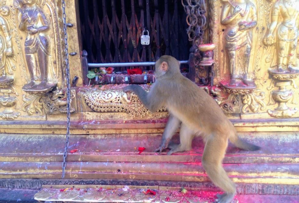 お供え物を狙う猿