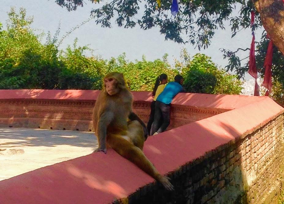 リラックス中の猿