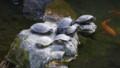 [2011Spring]根津神社の亀