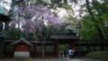[2011Spring]根津神社