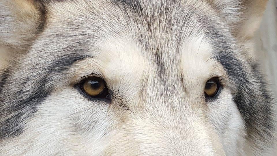 日本の水源を守る男! 狼(大神)...