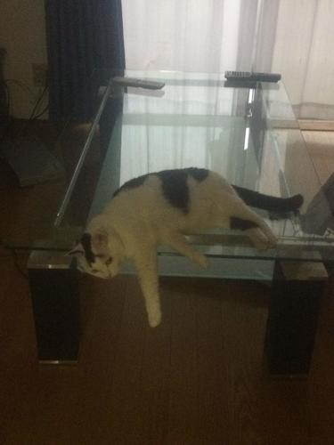 猫 白黒 テーブル