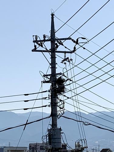 電柱に作られたカラスの巣 電線