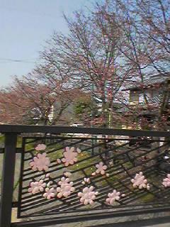 桜さきはじめ