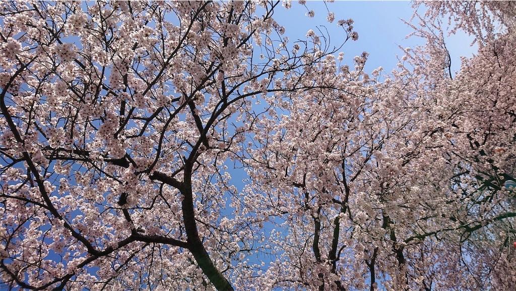 f:id:arasakishimai:20210421223505j:image
