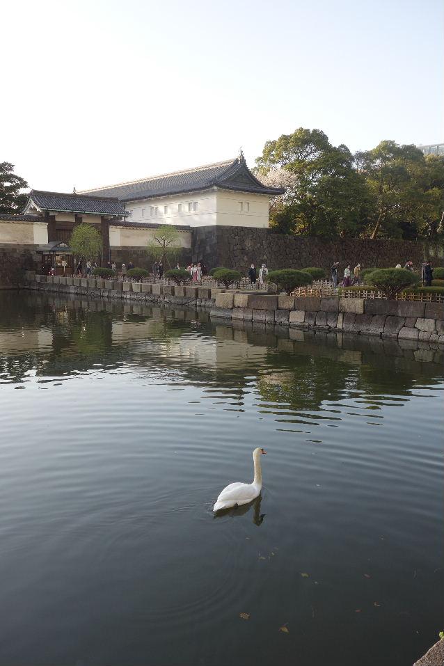 f:id:arashi_golf:20200325235629j:plain