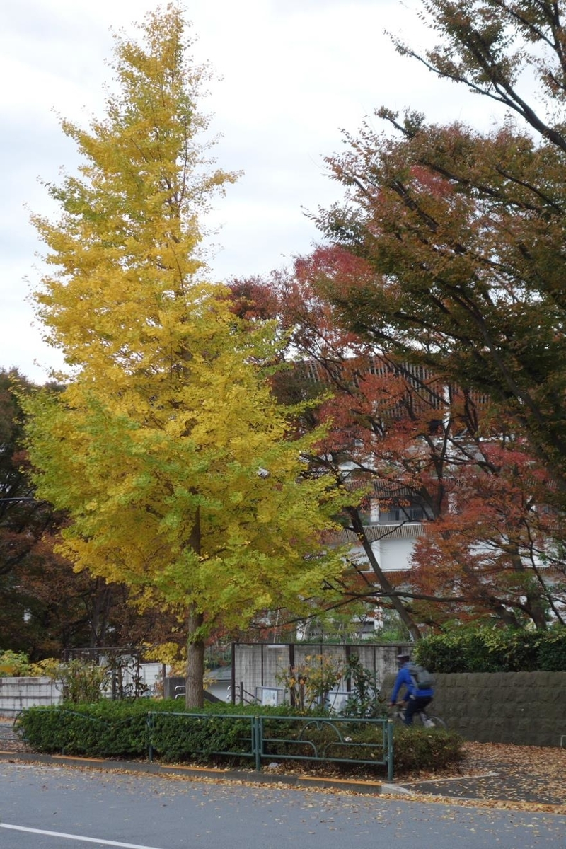 f:id:arashi_golf:20201120223139j:plain