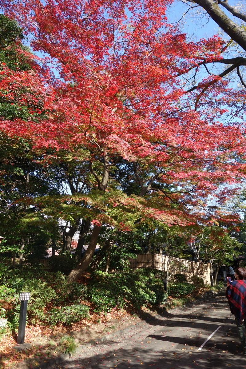 f:id:arashi_golf:20201129153356j:plain