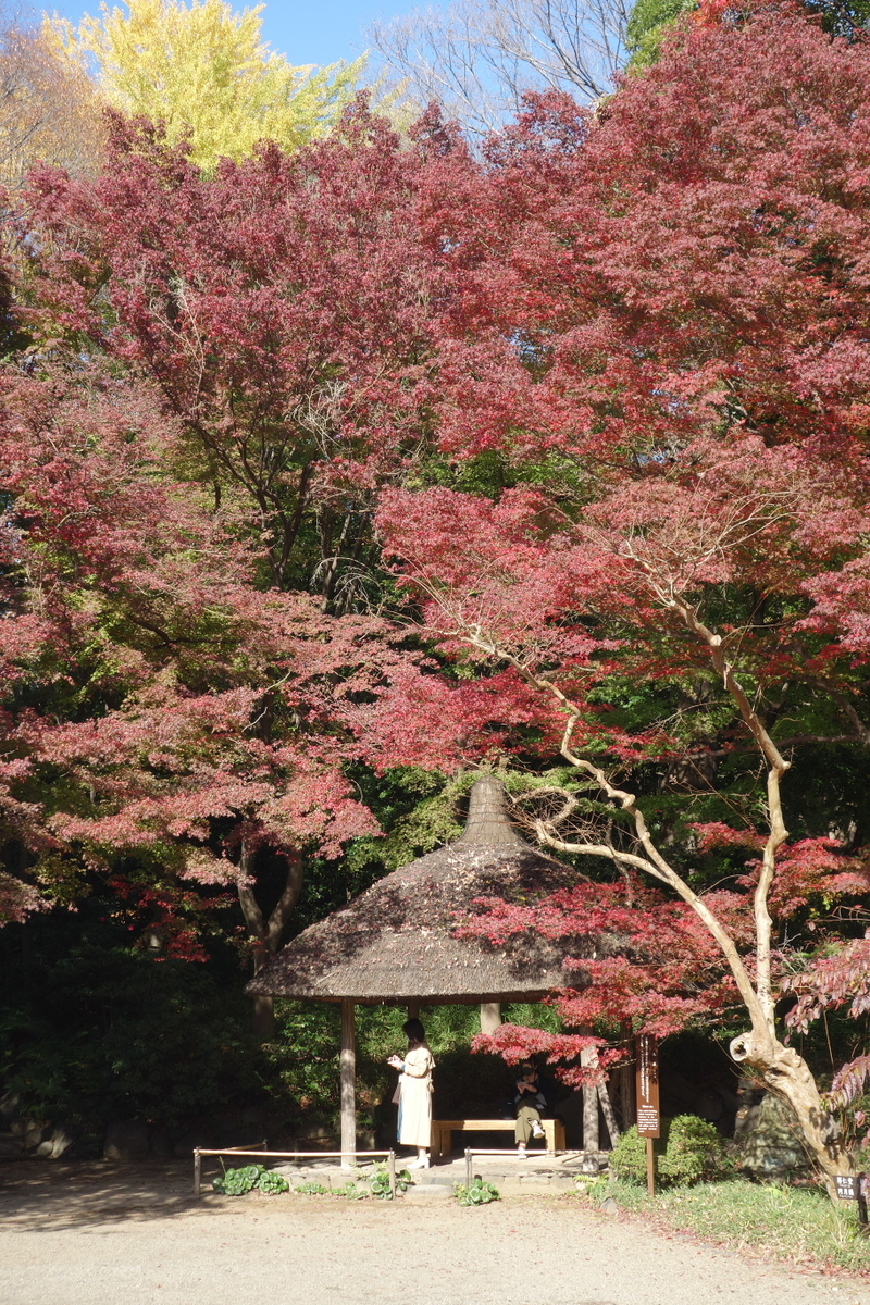 f:id:arashi_golf:20201129204513j:plain