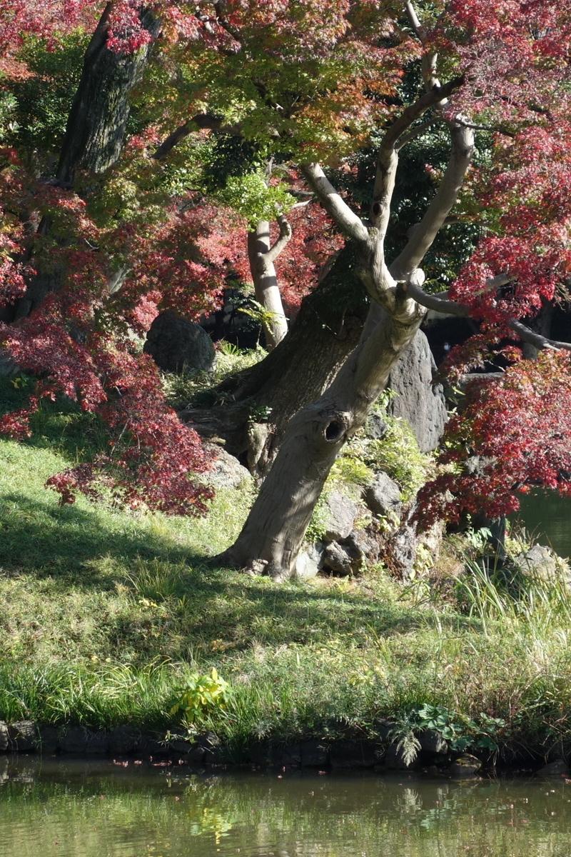 f:id:arashi_golf:20201129205222j:plain