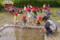 田植え(秋田県秋田市の楽しい幼稚園 新屋幼稚園)食育