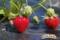 真っ赤に実ったイチゴ(秋田県秋田市の楽しい幼稚園 新屋幼稚園)食