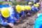 ジャガイモ種イモ植え(秋田県秋田市の楽しい幼稚園 新屋幼稚園)