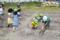 サツマイモ水やり(秋田県秋田市の楽しい幼稚園 新屋幼稚園)