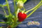 イチゴ(秋田県秋田市の楽しい幼稚園 新屋幼稚園)食育
